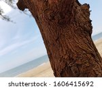 Dried Tree Branches On The...