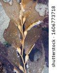 sea anemones and seaweed in la jolla tidepools in southern california