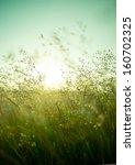 Long Summer Dry Grass Against A ...