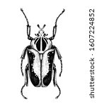 hand sketched goliath beetle.... | Shutterstock .eps vector #1607224852