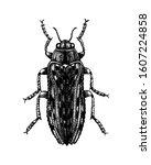 hand sketched jewel beetle.... | Shutterstock .eps vector #1607224858