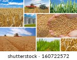 Production of wheat, collage - stock photo