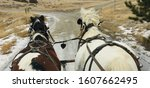 Small photo of Livestock in rural Absarokee Montana