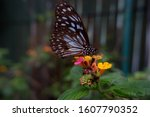 Flowers And A Butterfly On A...