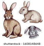 watercolor cute easter bunnies...   Shutterstock . vector #1608148648