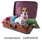Cute Dog Sits In A Suitcase Fo...