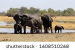 Herd Of African Elephants...