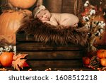 Autumn Portrait Of A Sleeping...