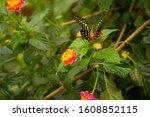 Kongini Flower Butterfly On It...