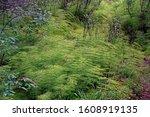 wood horsetail forrest autumn... | Shutterstock . vector #1608919135
