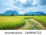 Rice Field With Luang Chiang...