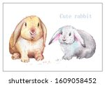 Cute Rabbit Painted With...