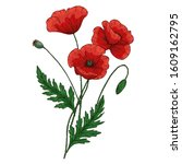 Summer Bouquet With Red Poppy...