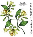 vanilla flower and leaf drawing ... | Shutterstock .eps vector #1609229752
