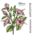pink hibiscus flower and leaf... | Shutterstock .eps vector #1609229758
