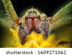 macro shots of spiders on...   Shutterstock . vector #1609271062