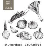 onion. botanical ilustration...   Shutterstock .eps vector #160935995