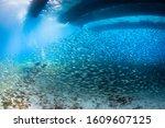 School Of Fish In Cozumel Mexico