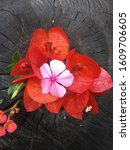 Small photo of Flower for wallpaper. This is a small sample of the immense natural