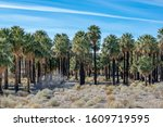 Usa  Nevada  Clark County  Warm ...