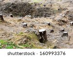tree stump remains from... | Shutterstock . vector #160993376