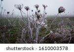 Frozen flower in winter, Lumix G7