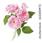 Rose Flowers Bunch Isolated On...