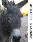 Ethiopian Donkey In The Street