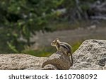 Squirrel Perched On A Rock To ...