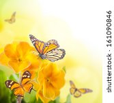 Yellow Flowers And Butterfly  ...