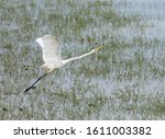 The Heron Bird And Wet Land.