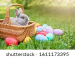Little Bunny And Eggs In Basket ...