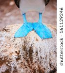 Close Up Of A Blue Footed Boob...