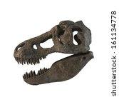 Tyrannosaurus Skull Isolated....