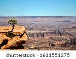 Solitary Little Juniper Tree...
