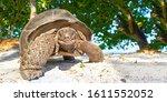 Seychelles Giant Tortoise  ...