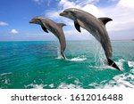 Dolphins Jumping Out Of The...