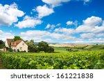 Vineyard Landscape  Montagne D...