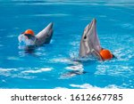 Two Dolphins Play With An...