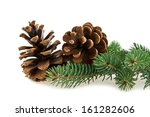 Cone And Branch Of Fir Tree On...