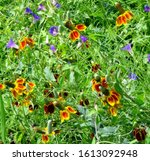 Abstract Photo Of A Colorful...