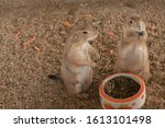 Small photo of Two parry dogs are eating food in a bowl that is on the ground. is couple in valentines.