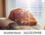 Ginger Cat Sleeping On Cushion...