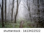 Small photo of Landscape with beautiful fog. Trail lead through a mysterious winter forest with hoarfrost on the branches and ground. Footpath through a winter vert. Magical and scary atmosphere.