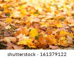 Carpet of autumn leaves with selective focus in front - stock photo