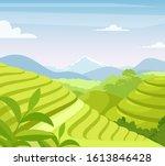 tea plantation flat vector... | Shutterstock .eps vector #1613846428