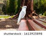 White Yellow Cockatoo...