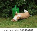Playful Cat.