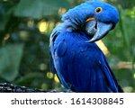 Adorable Pose Of Vivid Blue...