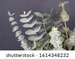 Fresh Eucalyptus Zinera Close...